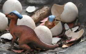 Just hatched! Two baby Parasaurolophus say hello to the world - and Edinburgh Zoo. Photo copyright RZSS