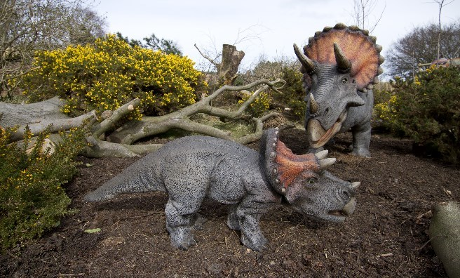 Triceratops are amongst the dinosaurs to be spotted on the hill at Edinburgh Zoo. Photo copyright RZSS