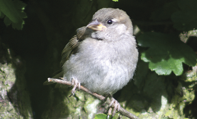 A sparrow keeps a watchful eye out for predators