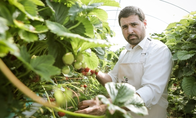 Adrian selecting strawberries for his latest cocktail masterpiece