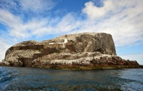 The Scottish Sea Bird Centre provides video links to the birds on the Bass Rock. Photo by ROB MCDOUGALL
