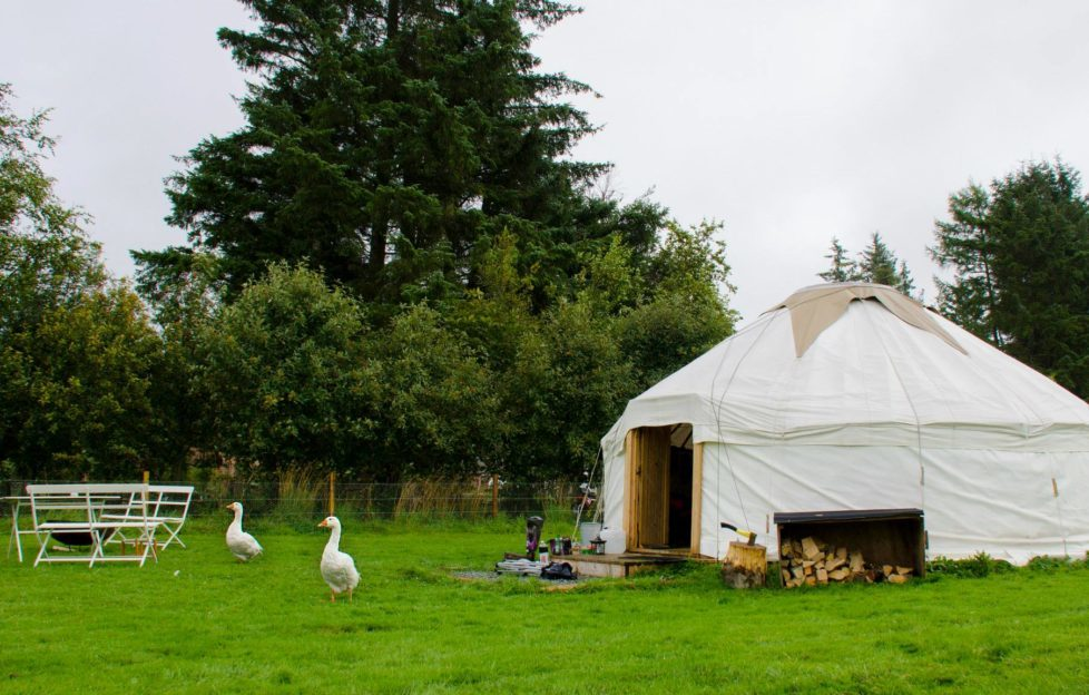 The Monster Yurt at the Ecocamp, complete with mischievous geese