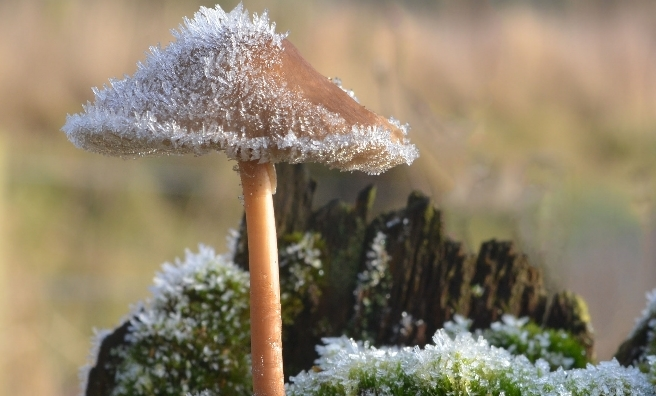 Fungi in the Frost by Alan Edwards (World Flora)