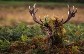 Hide 'n' Seek by Christopher Mcleod (Worldwide Wildlife)