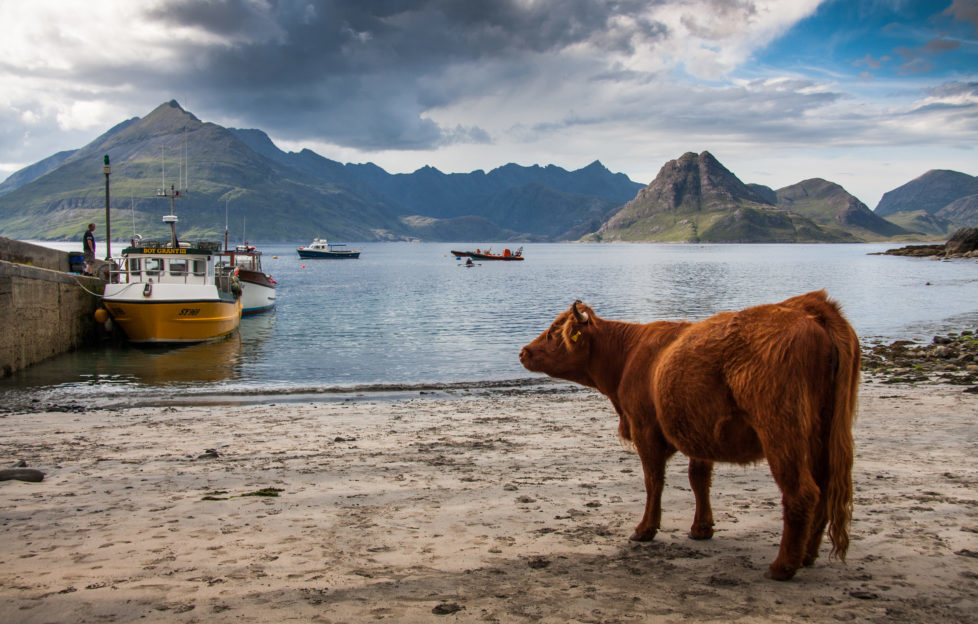 The coos think so too! Pic: shutterstock