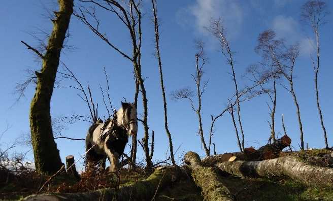 Horse logging is one of the highlights at the Scottish Game Fair 2016