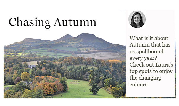 chasing-autumn-2