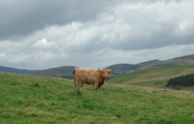 Happy Coosday on a Sunday!