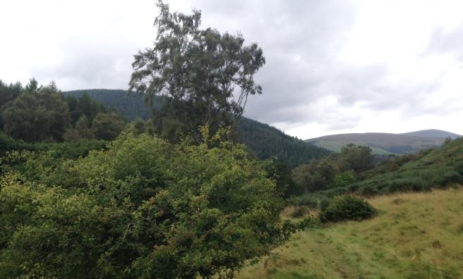 The beautiful Borders countryside.