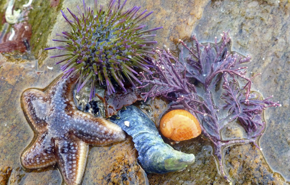 Explore rock pool life with Polly Pullar