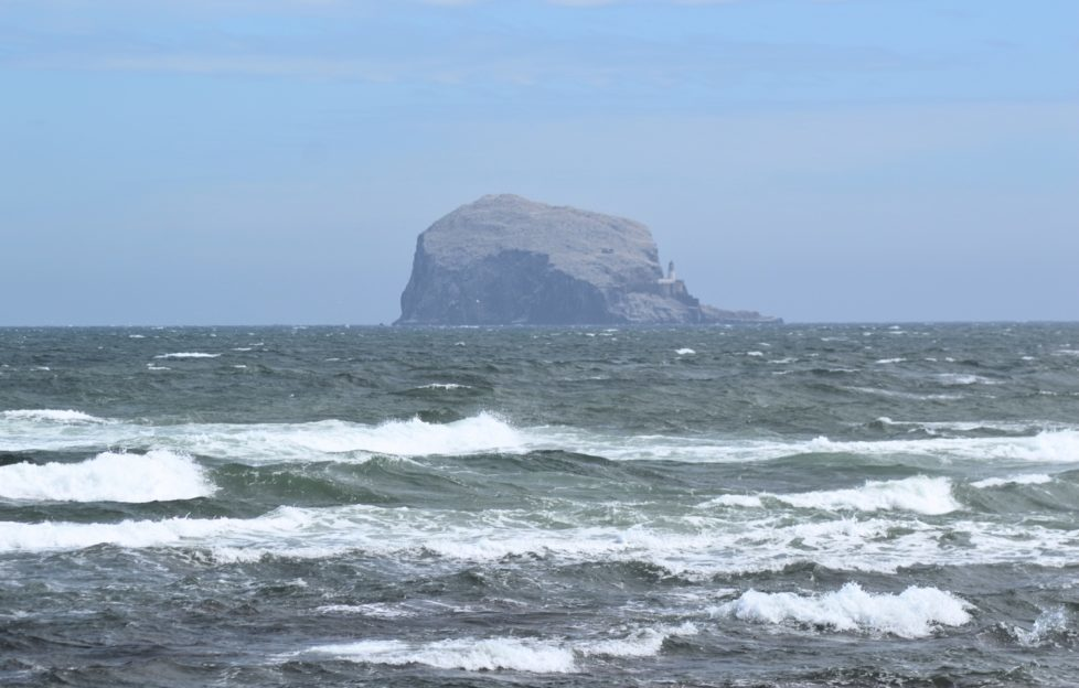 You can take boat trips out to the Bass Rock too for seabird spotting. Pic: Laura Brown