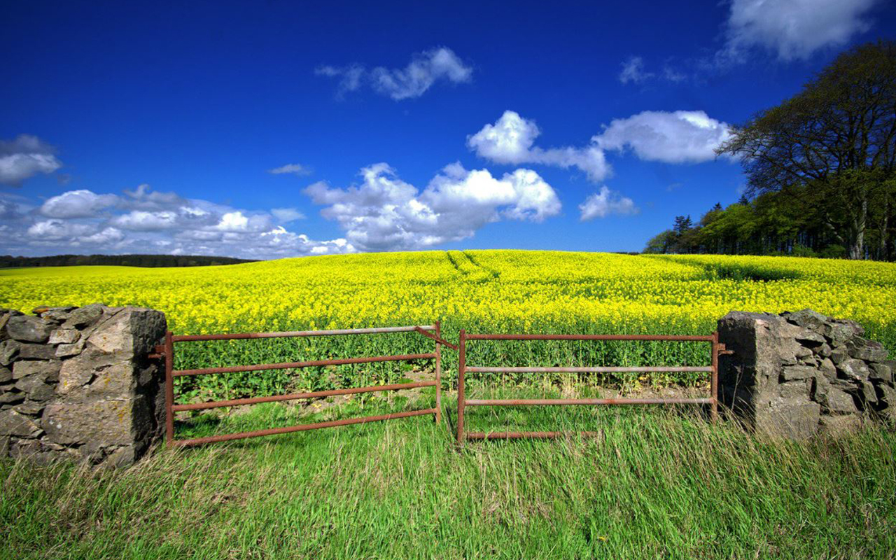 """Lovely spring day here in Aberdeenshire, Scotland."" Gordon Robertson, @gordo_rob Twitter."