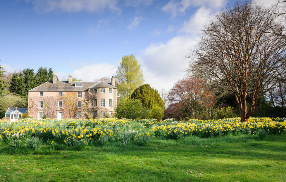 Events Scotland. Naturalised Backhouse Daffodils on the lawn at the front of the House on the Rossie Estate