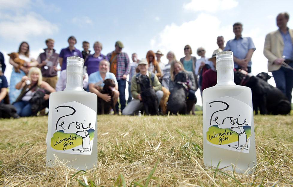 Persie Distillery's Labrador Gin