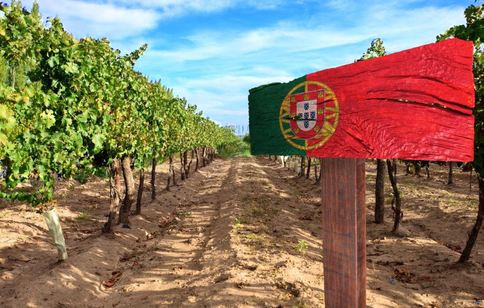 A Portuguese vineyard