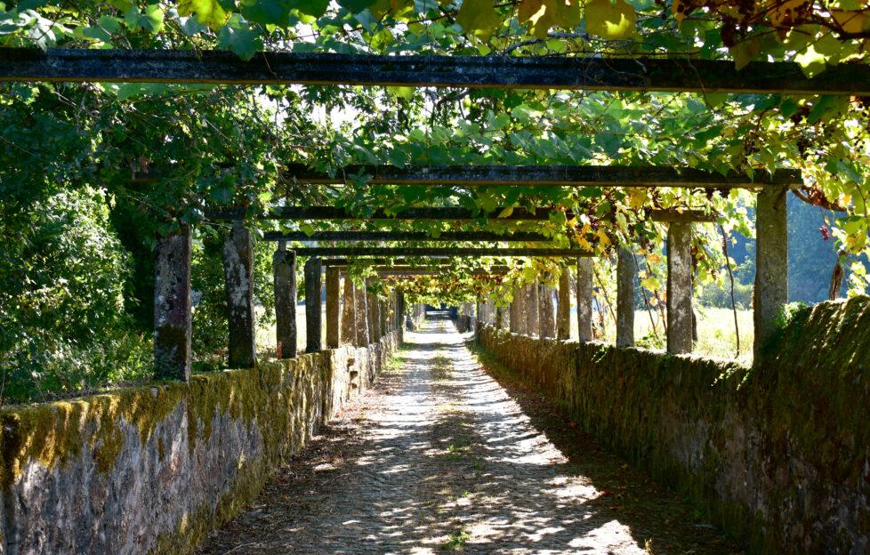 Albarino vineyards