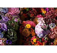Featured Image for Amy Annand Flowers