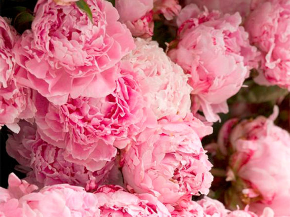 Featured Image for 105 ways to use peonies in your wedding flowers