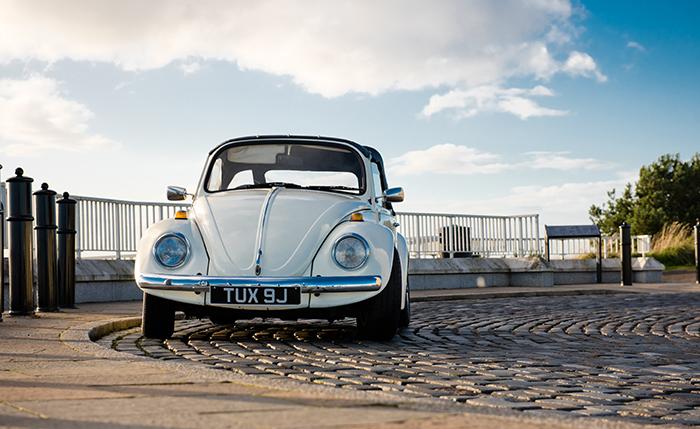 Daisy Love Bug