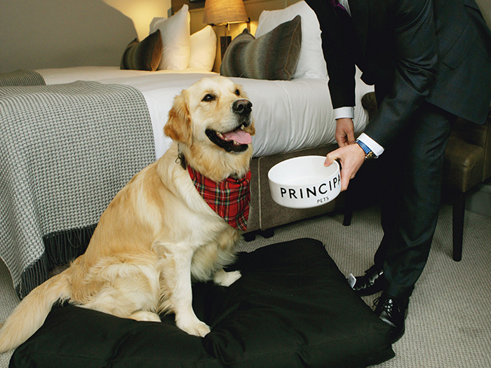 Featured Image for Dog-friendly minimoon holiday destinations in Scotland
