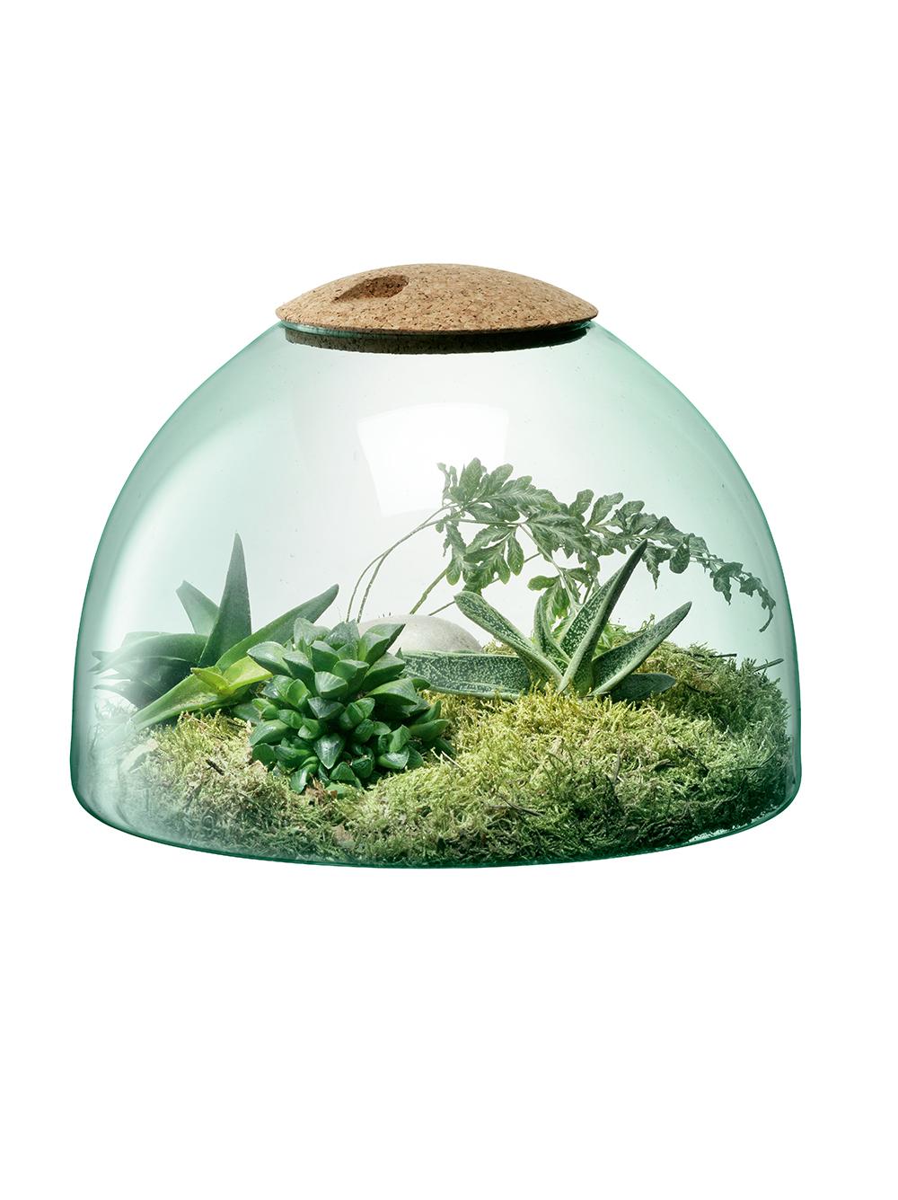 LSA canopy closed garden terrarium