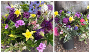 Flowers available to order from north-east Gordon Castle Walled Garden