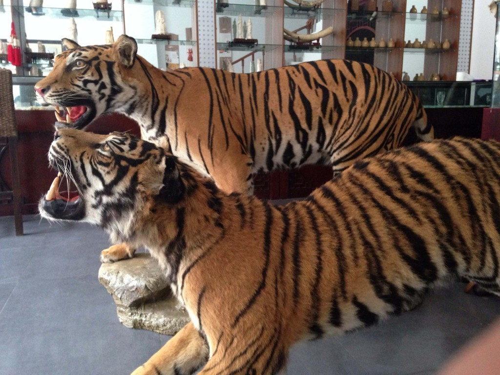 Stuffed tigers and ivory for sale in Laos (Environmental investigation Agency)