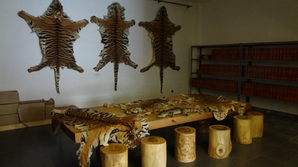 Tiger skins for sale (Environmental investigation Agency)