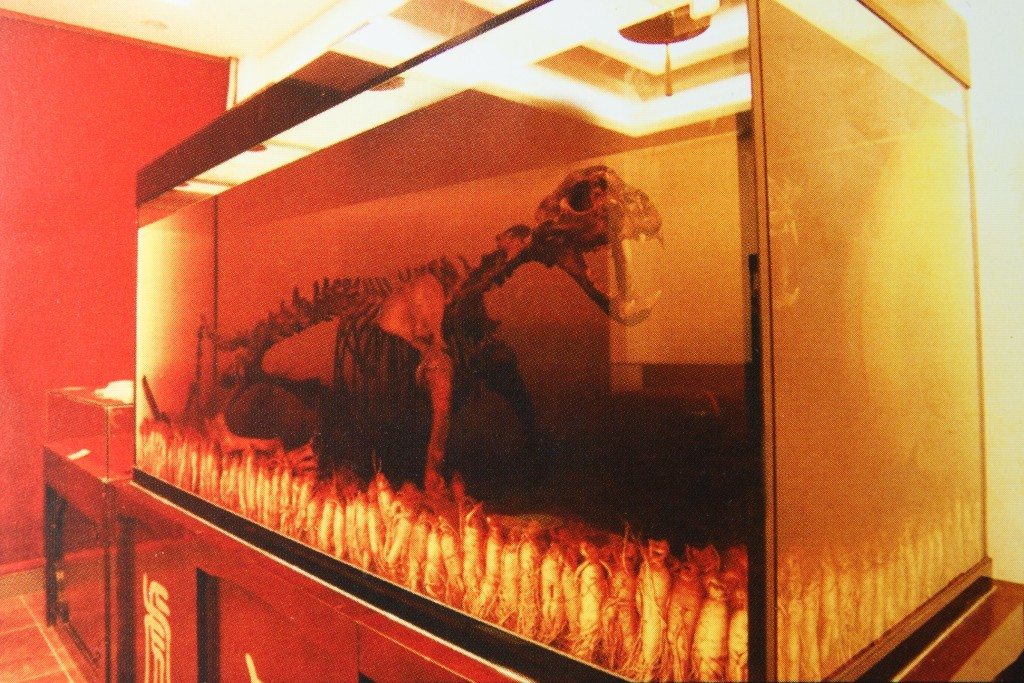 A tiger skeleton (Environmental investigation Agency)