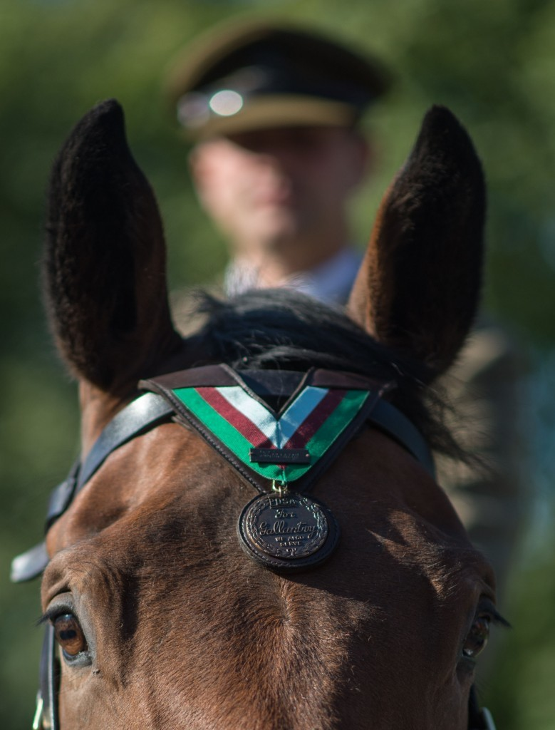 Galaxy receives the medal on behalf of WWI war horse Warrior