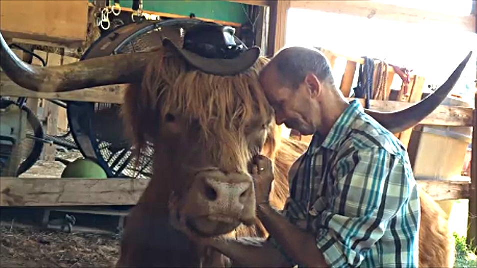 Marc Stewart from Virginia with his pet Highland Cow.