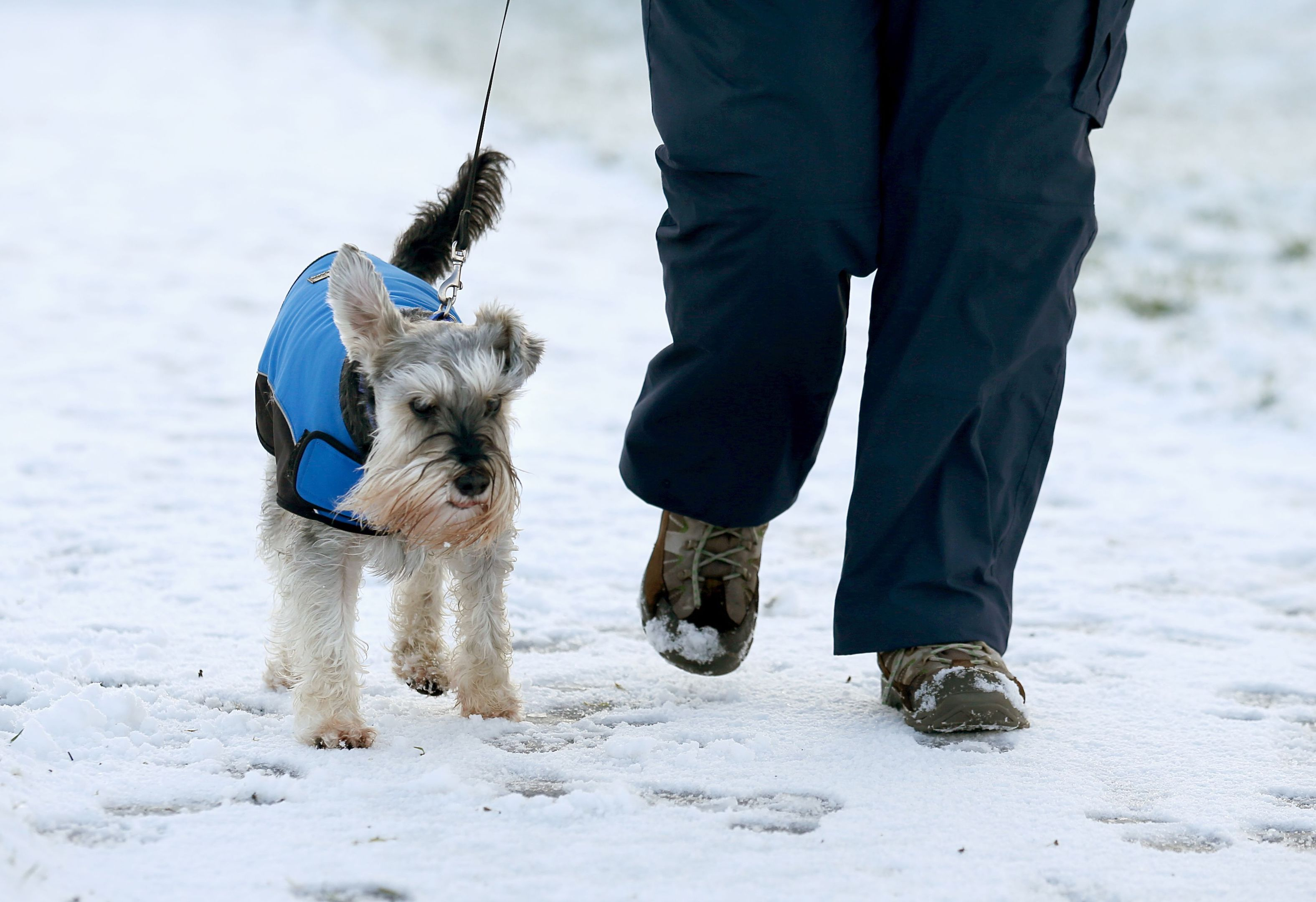 Ozzy the dog walks along a path through Falkirk Tryst golf club near Larbert (Andrew Milligan/PA Wire)
