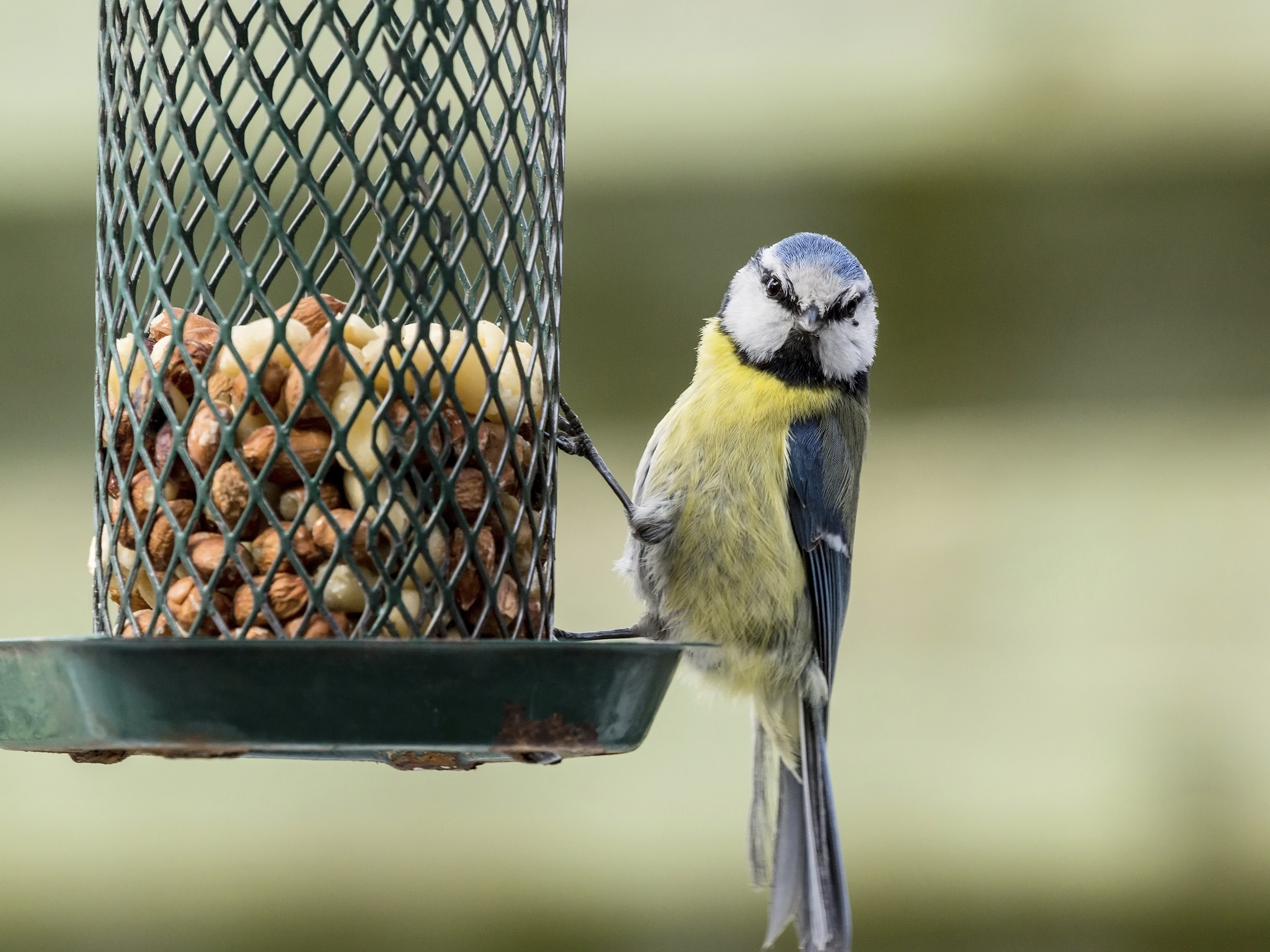 How has the winter affected birds? (Getty Images)