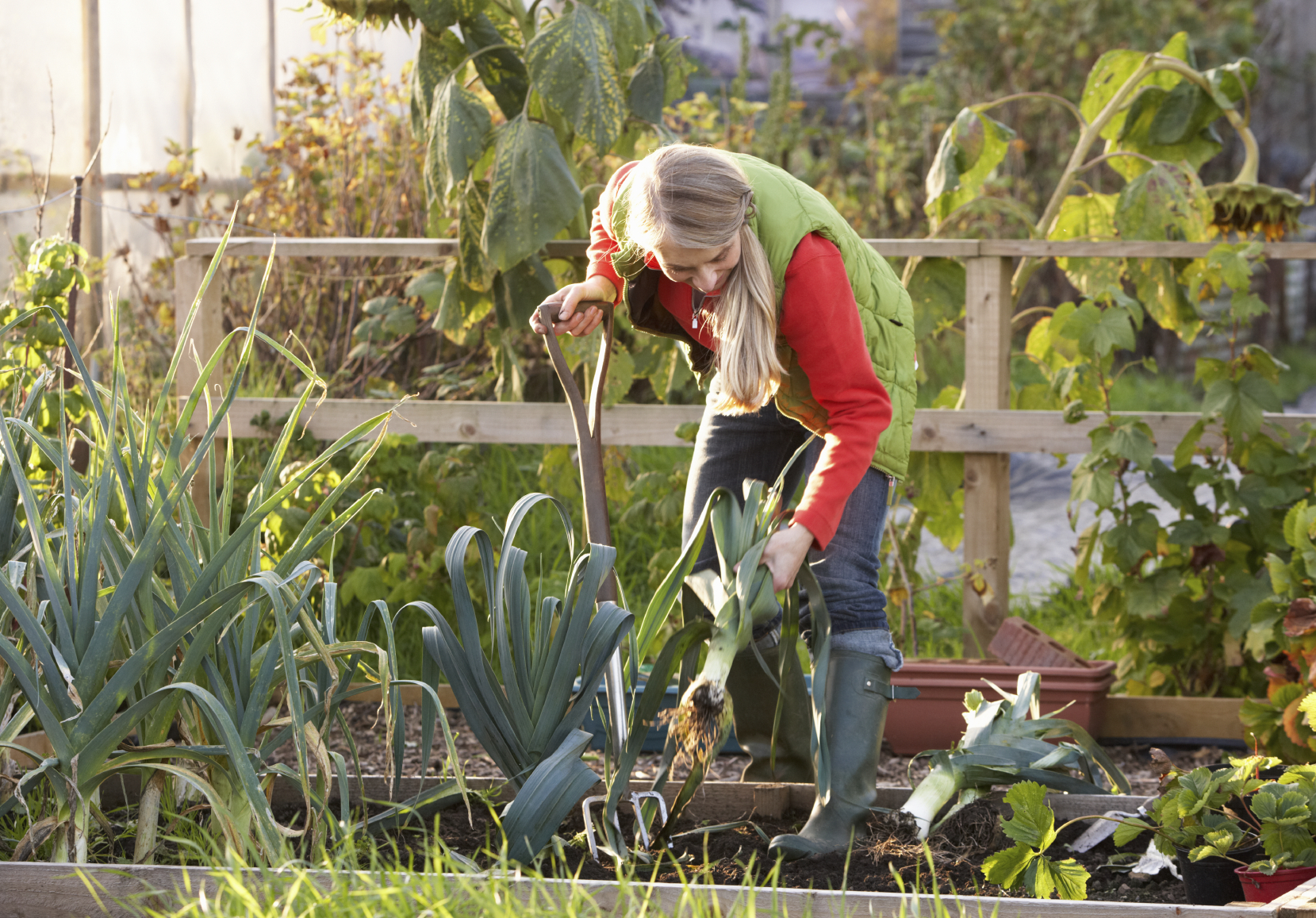 Sharing plots allows people without gardens to be able to grow food