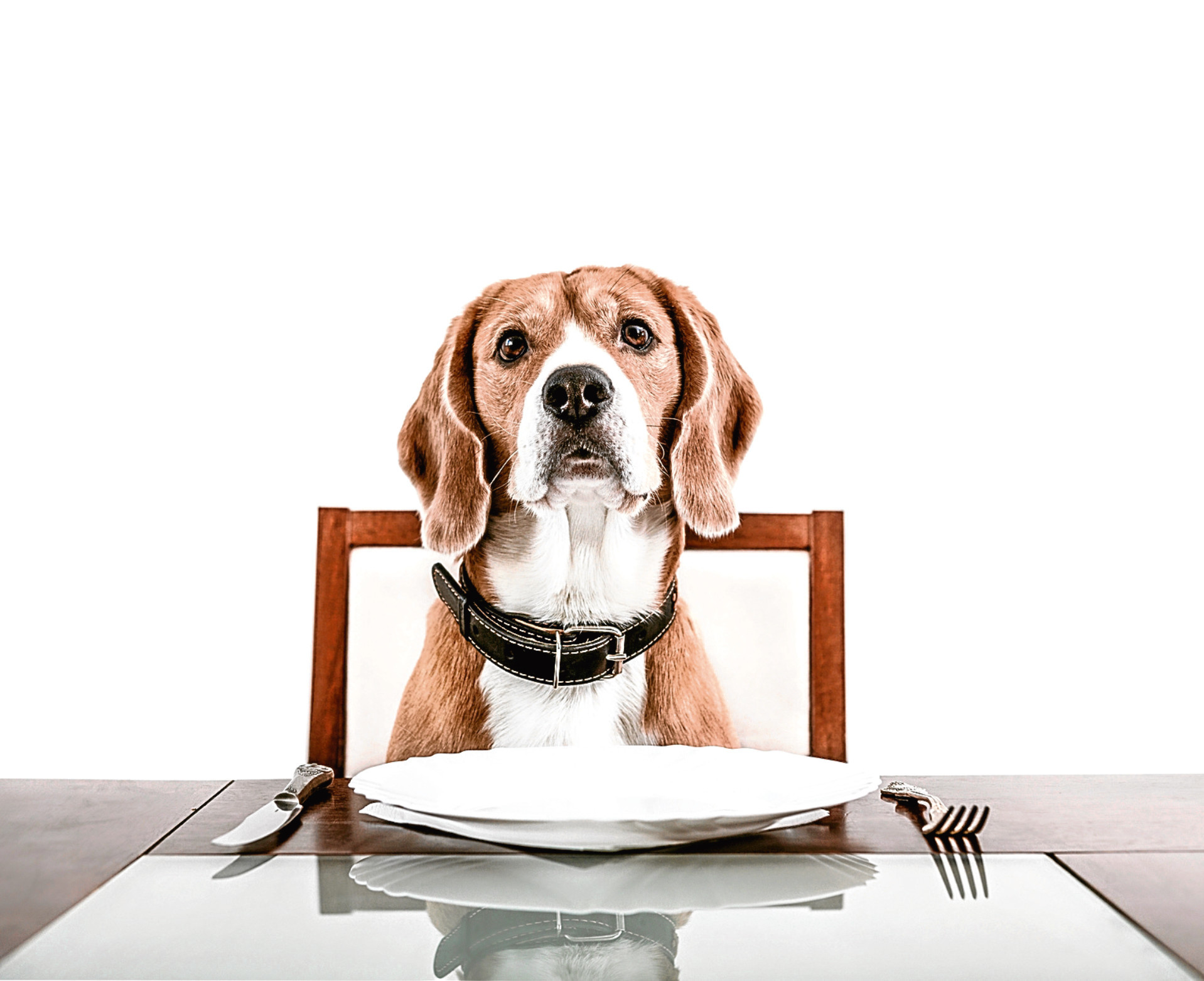 Dog's dinner (Getty Images)