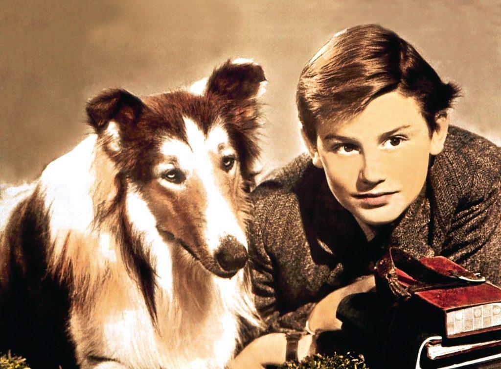 Lassie and Roddy McDowall (Allstar)