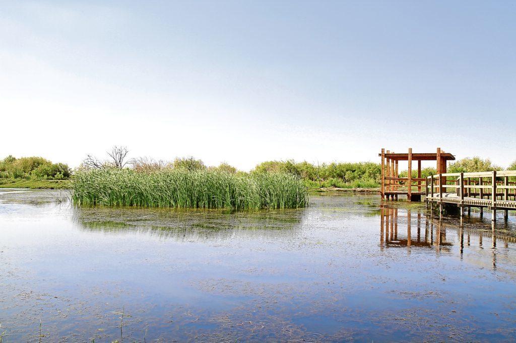 Azraq wetland Reserve in Jordan (Getty Images)