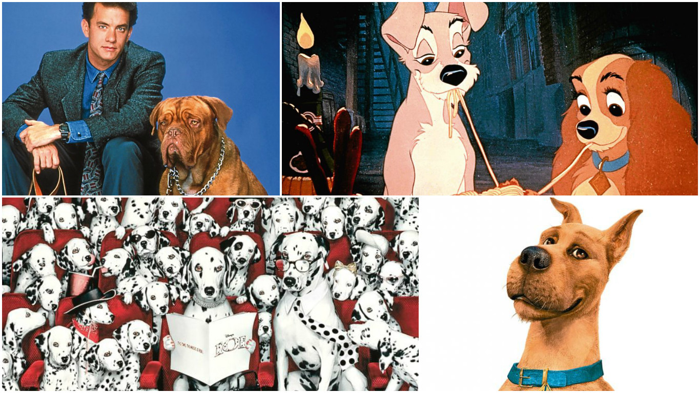 Canine stars of film (Allstar)