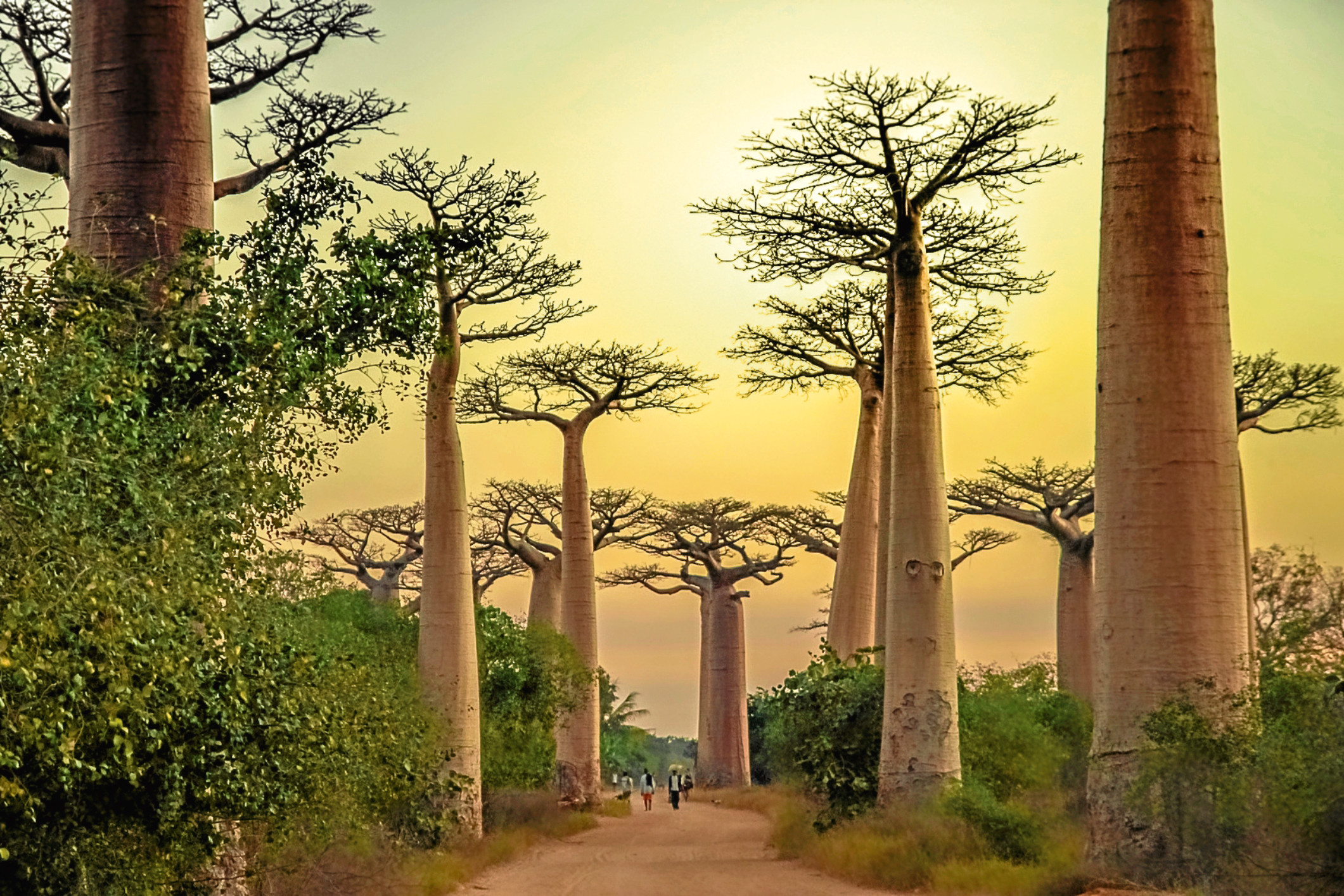 Sunset in the famous Avenida de Baobab near Morondava in Madagascar