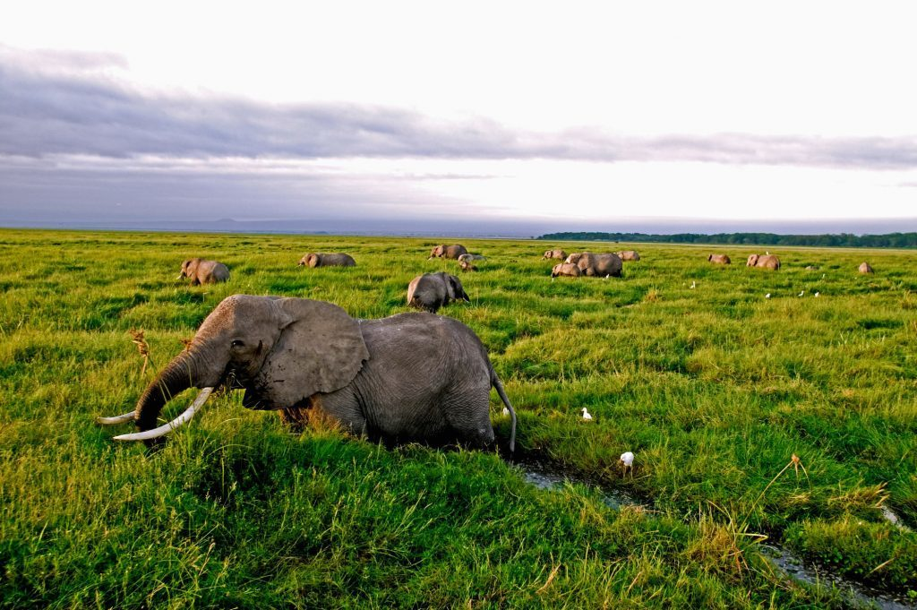 African elephants in Amboseli National Park, Kenya (Martin Harvey/WWF/PA Wire)