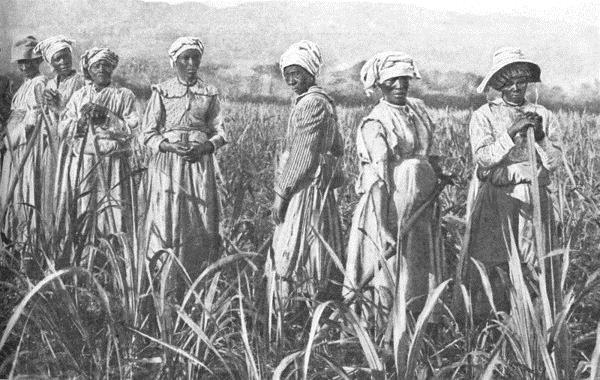 Sugar plantation workers in Jamaica