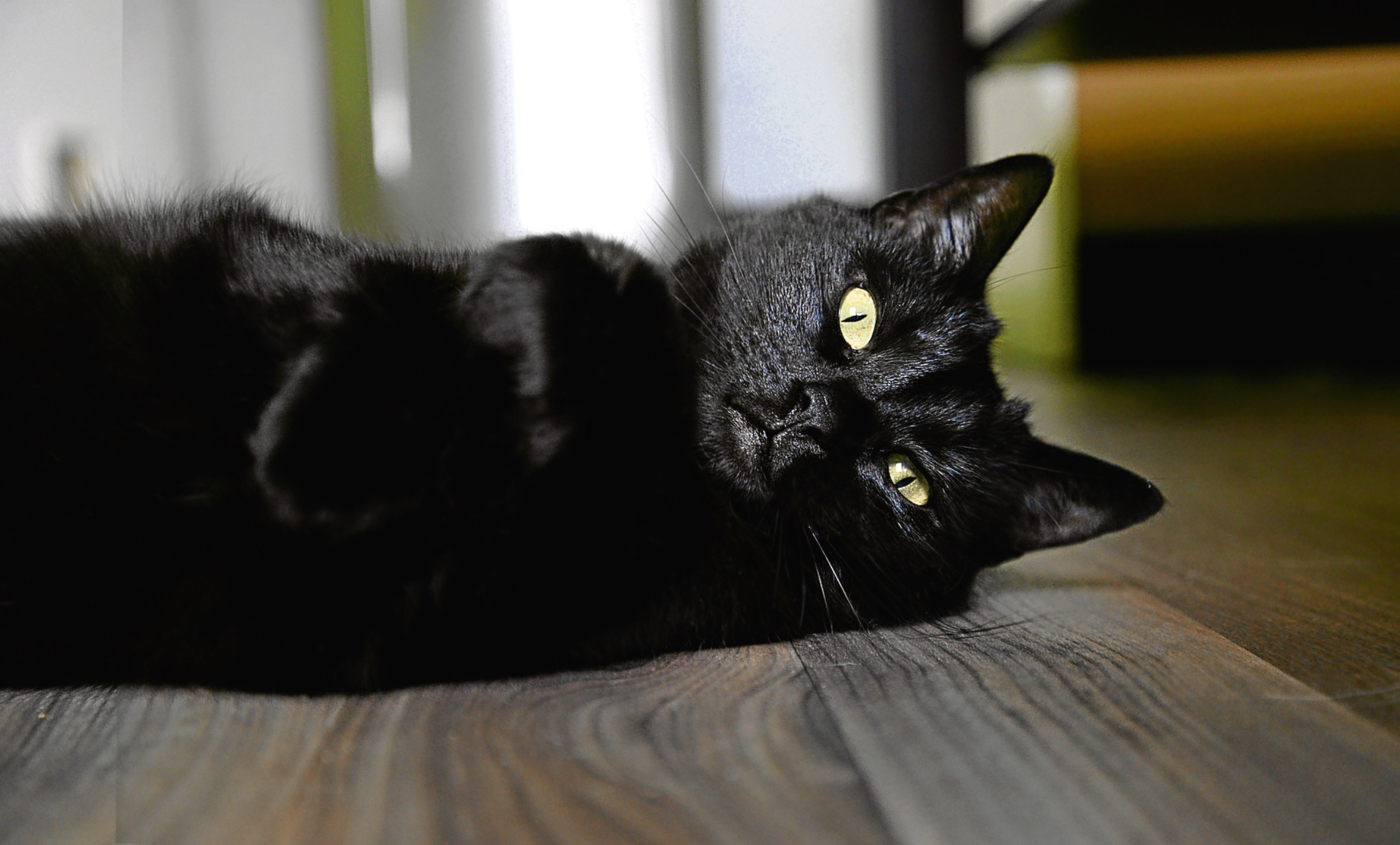 Close up of cute cat lying on the floor