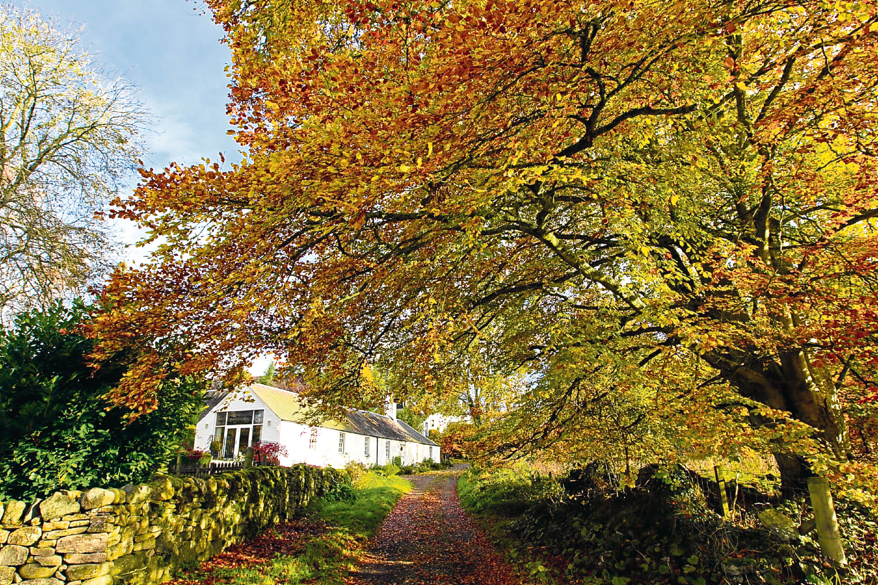 Cottage near River Tay, near Scone  (Andrew Cawley / DC Thomson)