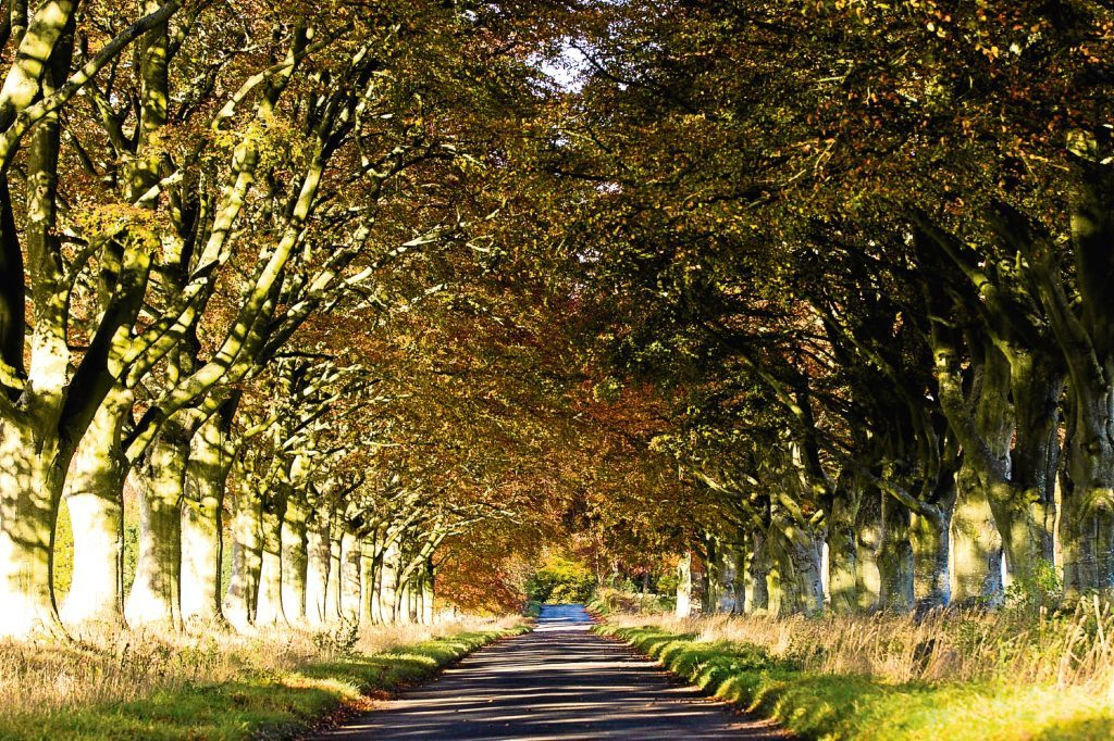 Tree lined road, near Scone  (Andrew Cawley / DC Thomson)