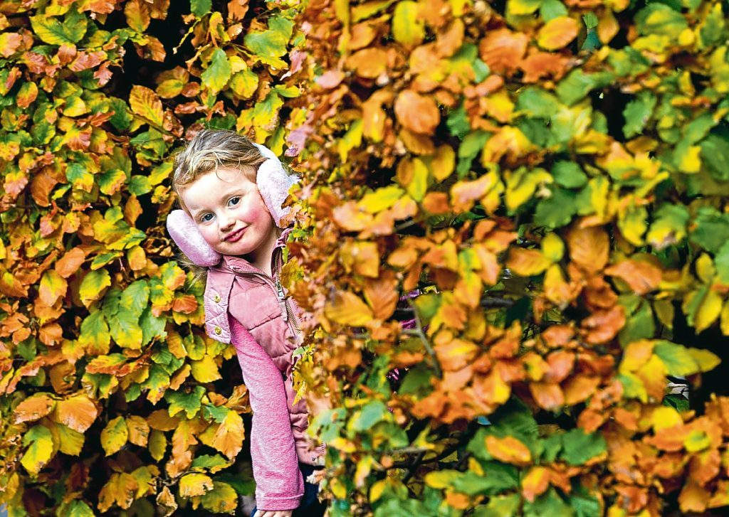 """""""Maddy"""" Jones (4) from Glasgow, enjoying the Autumn colours, as she plays in Pollok Park, Glasgow (Andrew Cawley / DC Thomson)"""