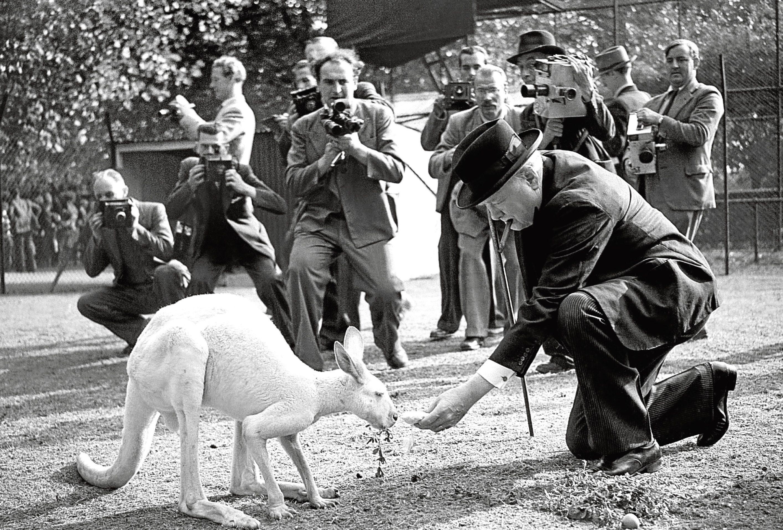 """Winston Churchill visits """"Digger"""", his white kangaroo at London Zoo"""