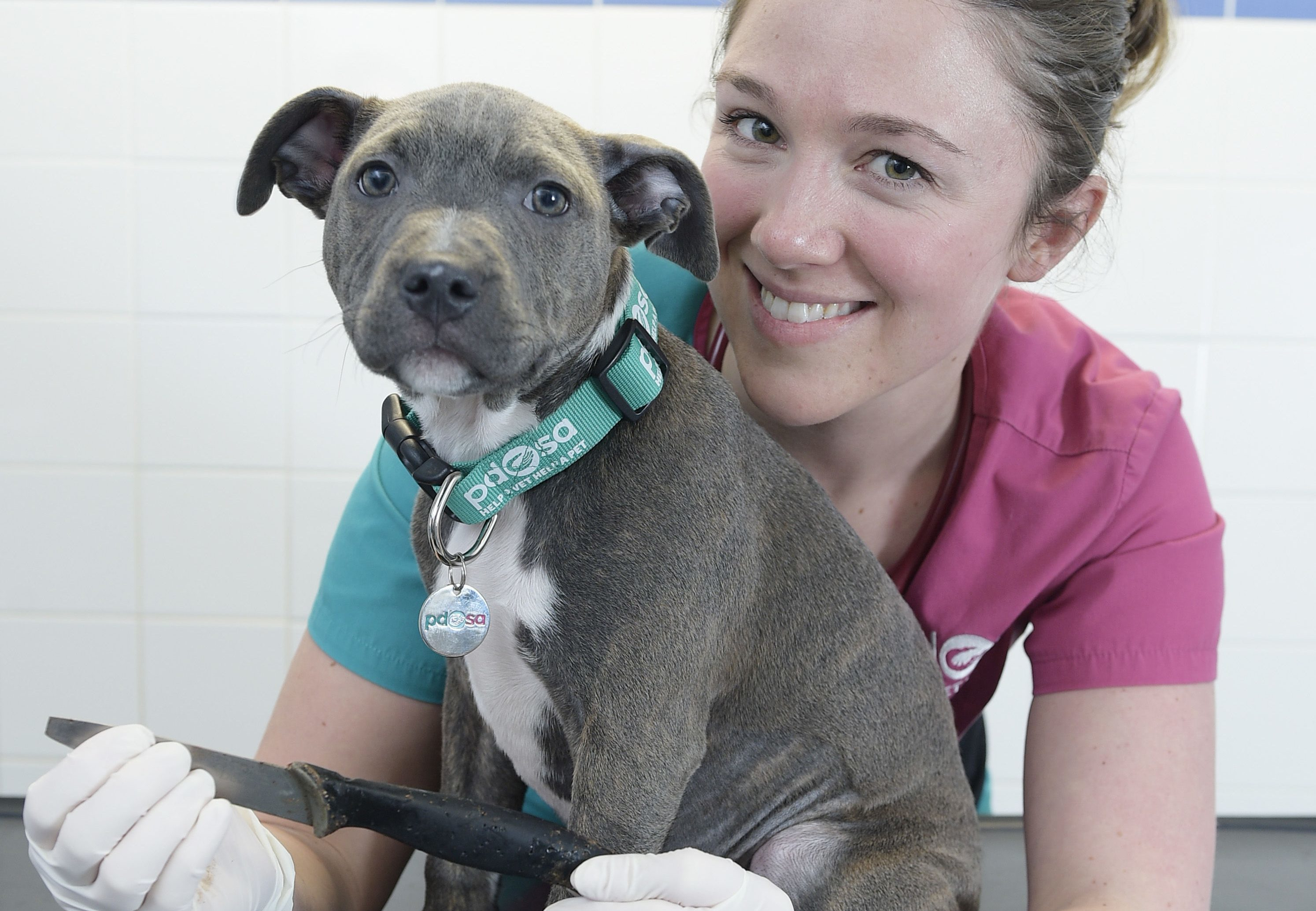 Vet Emily Ronald with Macie the Staffordshire Bull Terrier (Sandy Young / PDSA/PA Wire)