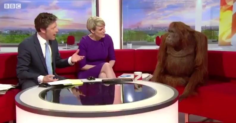 Beluti stars on this morning's BBC Breakfast