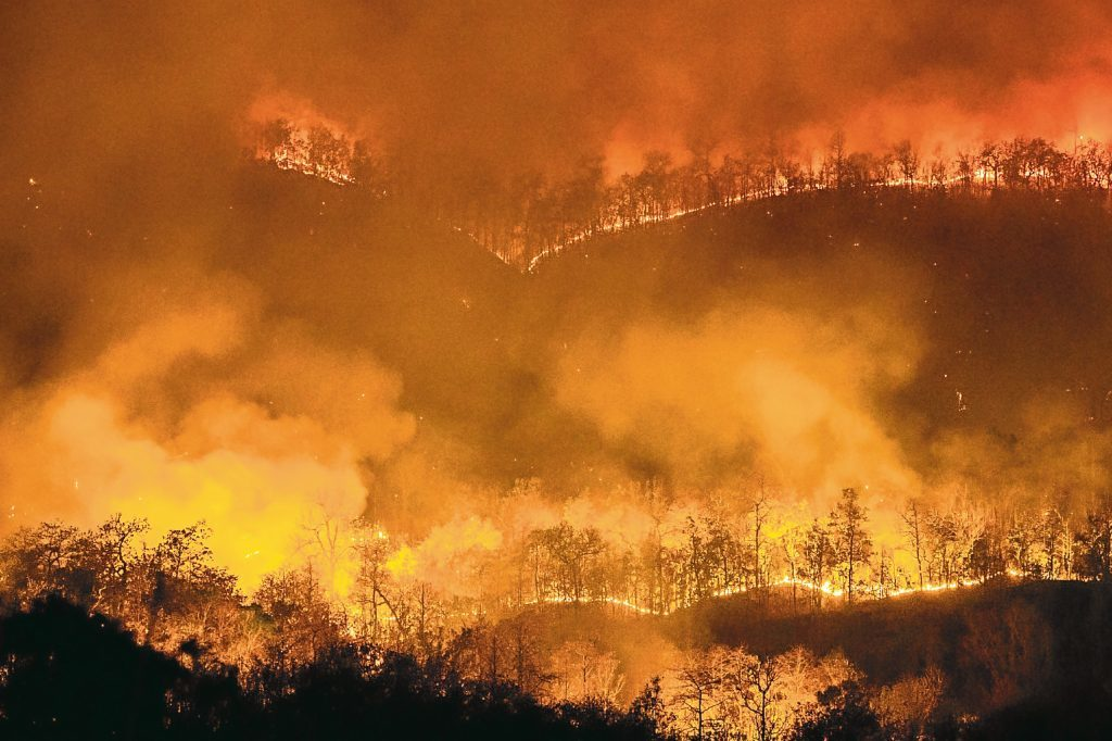 Forest fires (Getty Images)