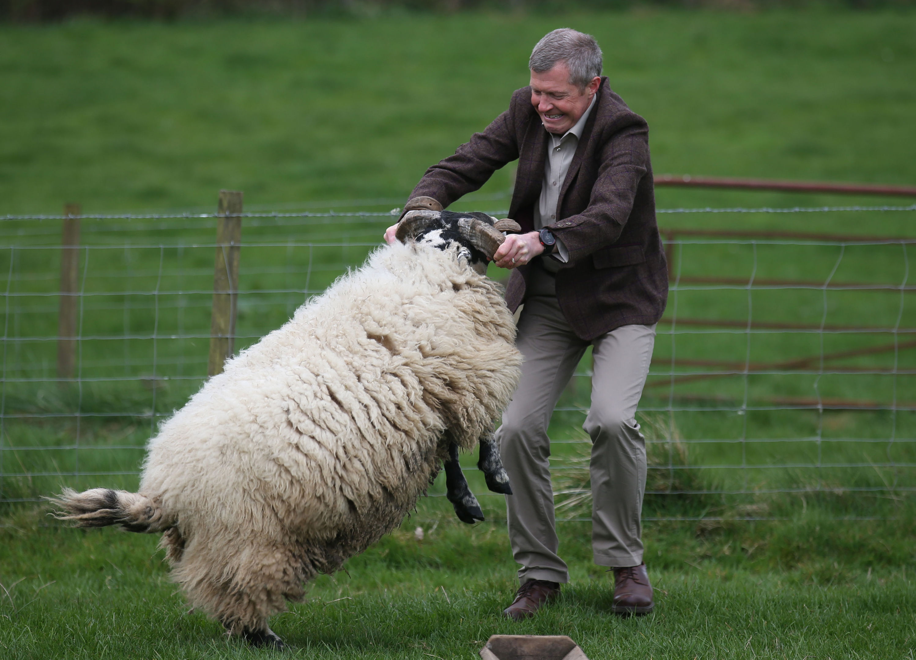Scottish Liberal Democrat leader Willie Rennie with a ram during a visit to Mill House farm in Kelty, Fife, as he campaigned in the Scottish local elections. (Andrew Milligan/PA Wire)